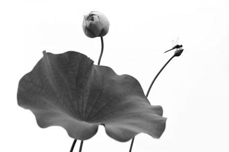 Blooming Season in Summer by Minghui Yuan