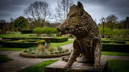 Wild Boar by Richard Kirk