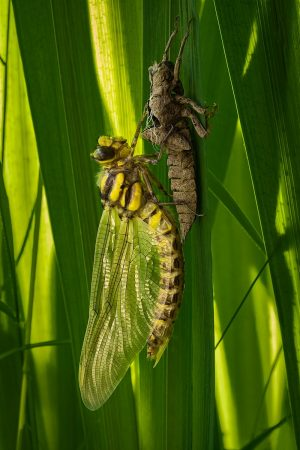 Dragonfly by Matthew Cremin