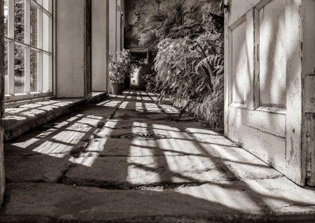 Shadows by Elaine Cox