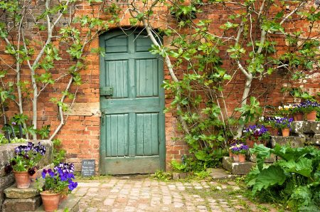 The Fig Door by Anne Haile